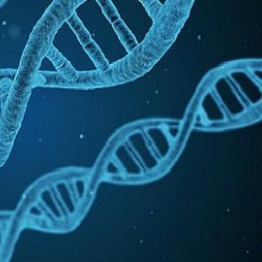 Photo of DNA strain