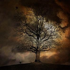 Photo of tree in stormy weather
